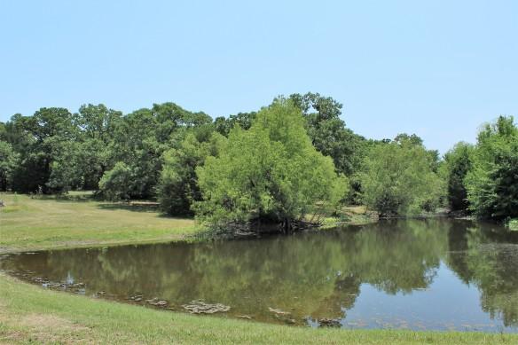 1a Pond IMG_8848 (2)
